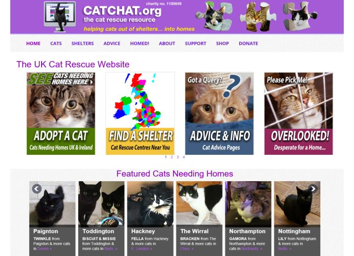 CATCHAT org