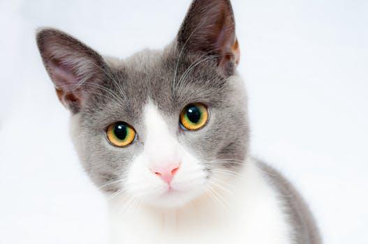 Choosing the right Kitten